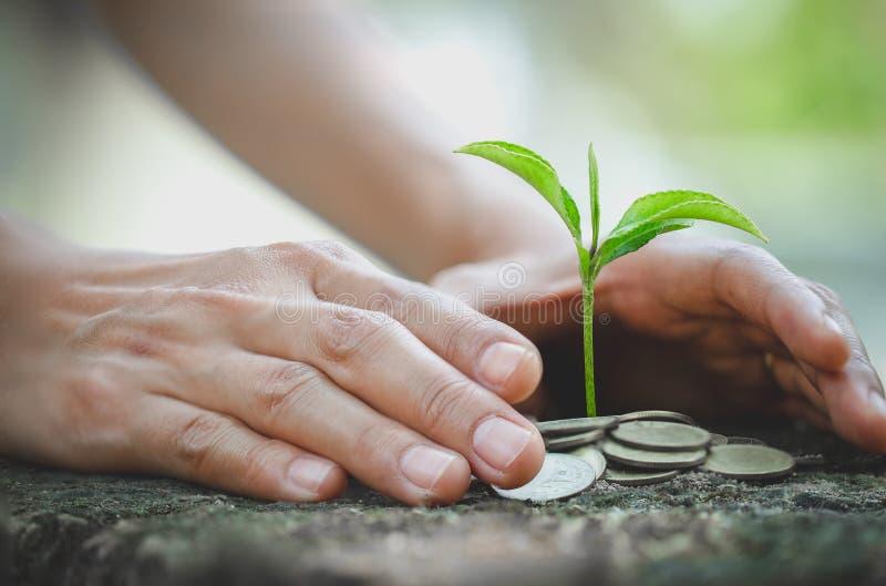 de hand beschermt geldstapel met installatie het groeien op muntstukken de muntstukken van het besparingsgeld, Handen die bomen o royalty-vrije stock afbeeldingen