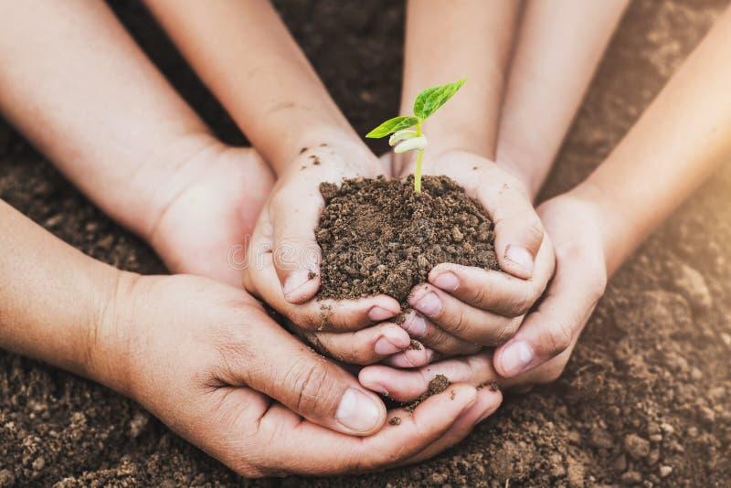 de hand die van concepteneco de jonge plant van de holdingsbescherming in tuin helpen royalty-vrije stock afbeeldingen