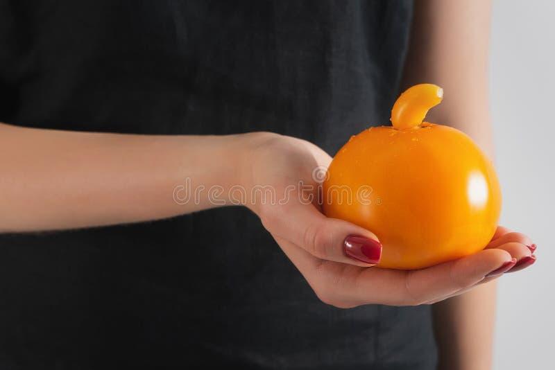 De hand die van het meisje een gele tomaat van een ongebruikelijke vorm houdt Genetisch gewijzigd organisme stock afbeeldingen