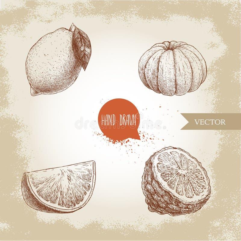 De hand getrokken geplaatste citrusvruchten van de schetsstijl De citroen, kalk, pelde mandarijn, mandarine, oranje plak en de be vector illustratie