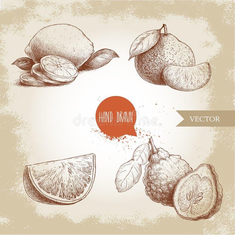 De hand getrokken geplaatste citrusvruchten van de schetsstijl Halve citroen, kalk, mandarijn, mandarine samenstelling, sinaasapp vector illustratie