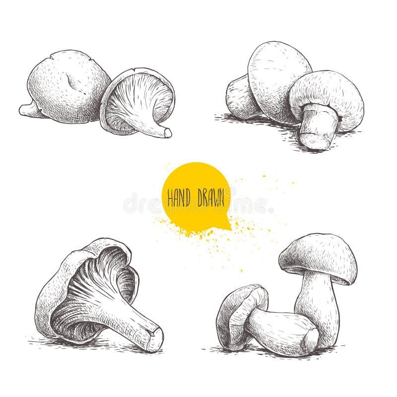 De hand getrokken geplaatste samenstellingen van frampaddestoelen van de schetsstijl verse Champignons, oesters, cantharellen en  vector illustratie
