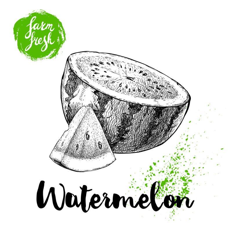 De hand getrokken halve watermeloen van de schetsstijl en de samenstelling van de driehoeksbesnoeiing Vector illustratie Landbouw stock illustratie