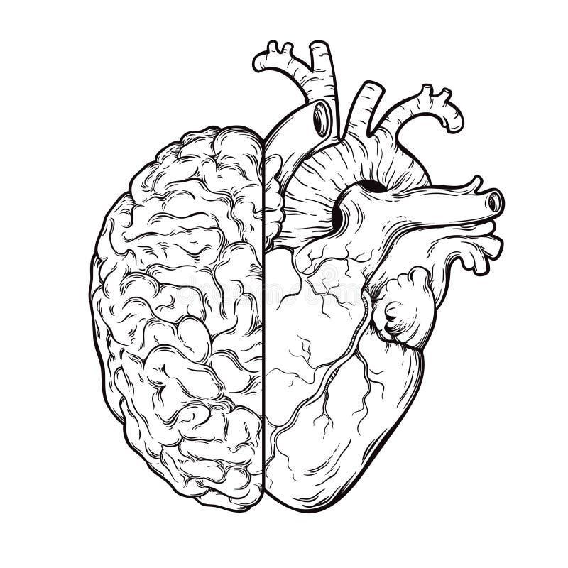De hand getrokken menselijke hersenen en het hart van de lijnkunst halfs - Logica en emotie prioritair concept Druk of tatoegerin stock illustratie
