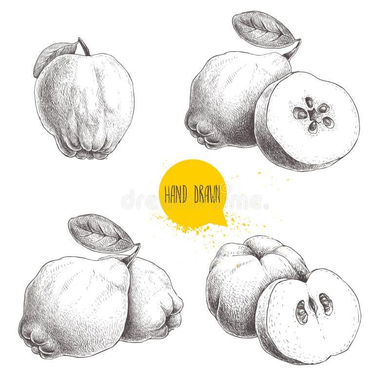 De hand getrokken reeks van de schetsstijl kweeperen Kweepeerappel met blad, groep kweeperen en gesneden kweepeer Uitstekende vec vector illustratie