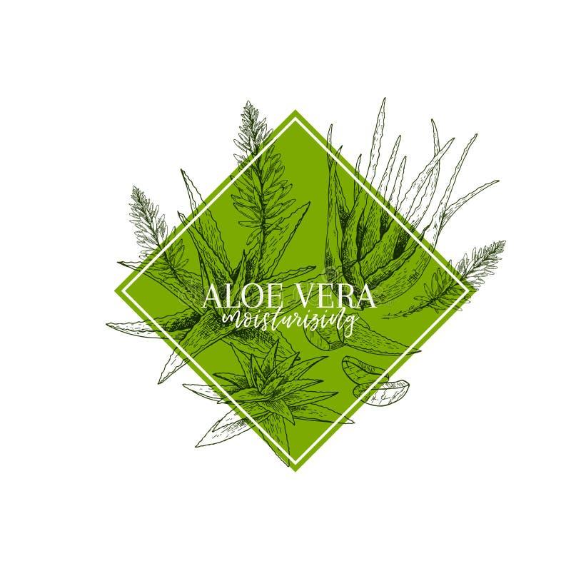 De hand getrokken tak en de bloem van aloëvera Gegraveerde vectorbanner healing Voedselingrediënt, aromatherapy, het koken voor vector illustratie