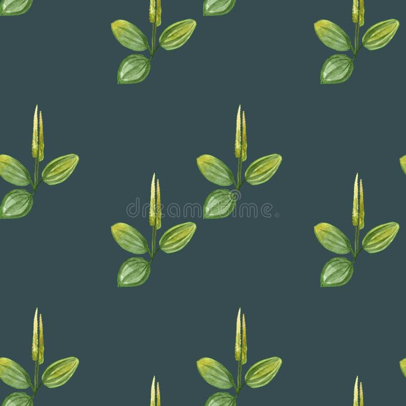De hand getrokken tekening van de patroon naadloze waterverf van weegbree met gele bloemen en groene bladeren die op groene achte vector illustratie
