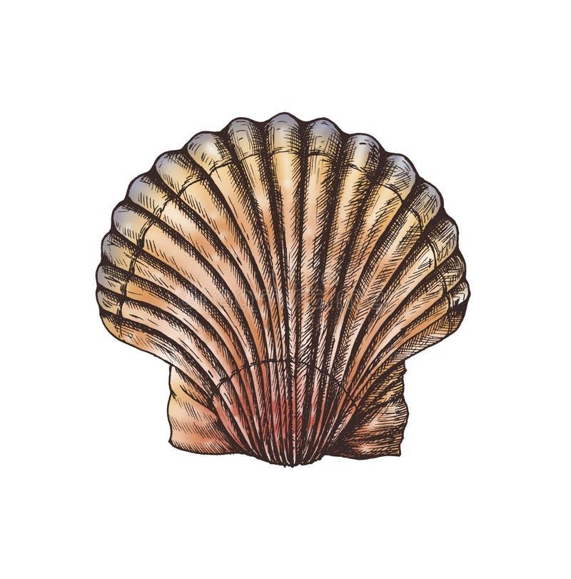 De hand getrokken tweekleppige schelpdieren van het kammosselzoutwater royalty-vrije illustratie