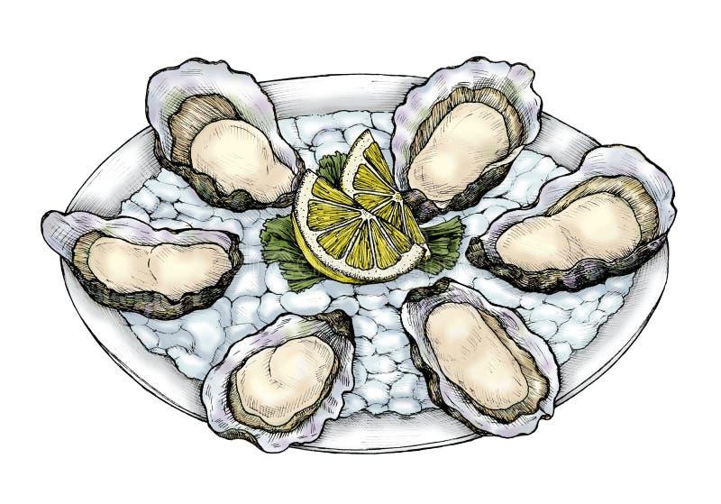 De hand getrokken tweekleppige schotel van het oesterzoutwater vector illustratie
