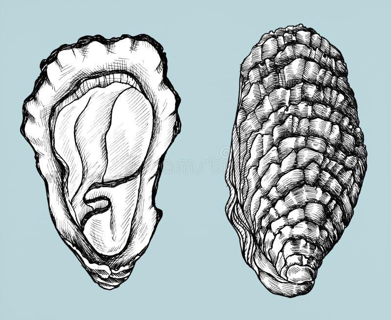 De hand getrokken tweekleppige van het oesterzoutwater stock illustratie