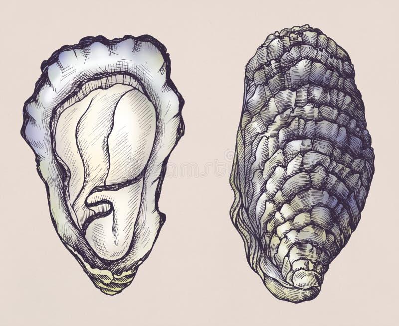 De hand getrokken tweekleppige van het oesterzoutwater royalty-vrije illustratie