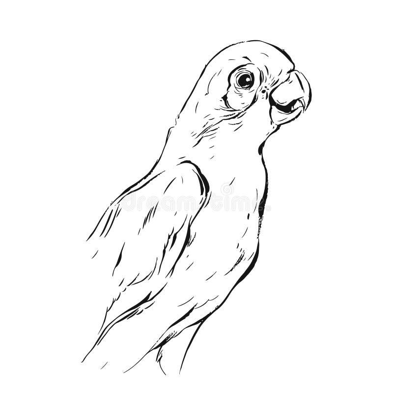 De hand getrokken vector abstracte grafische schets van de inkt realistische tropische papegaai die op witte achtergrond wordt ge vector illustratie