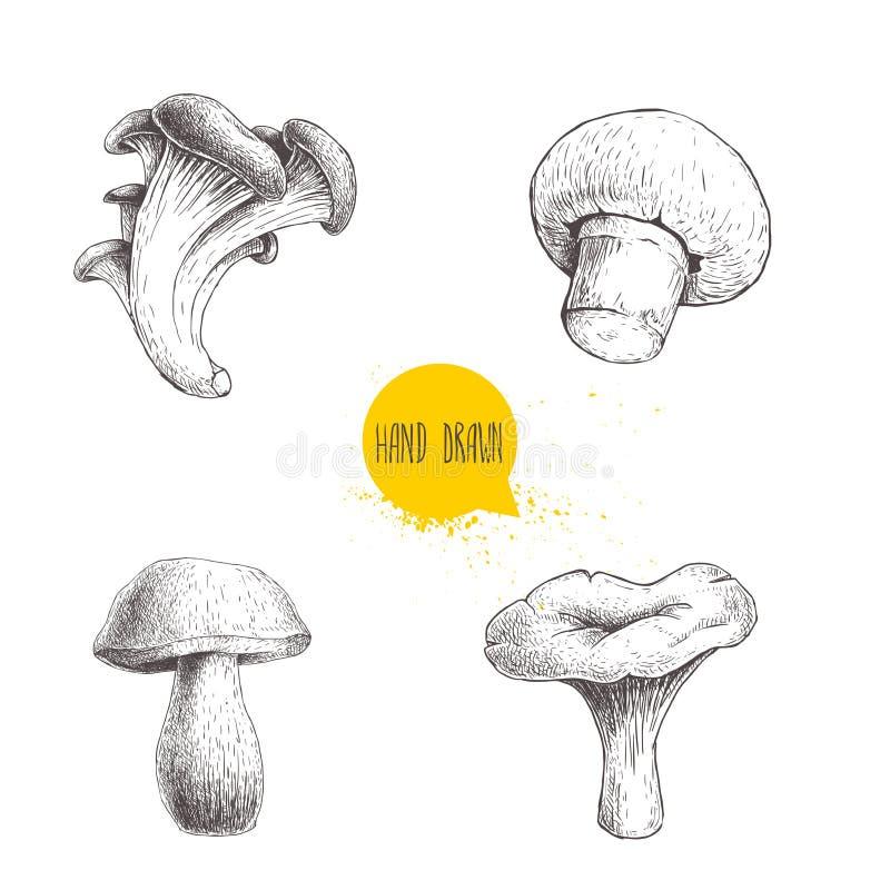 De hand getrokken verschillende bos geplaatste paddestoelen van de schetsstijl Champignon, oester, cantharel en porcinipaddestoel stock illustratie