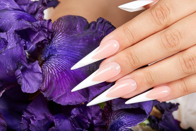 De hand met het lange kunstmatige Frans manicured spijkers en een purpere Irisbloem stock foto