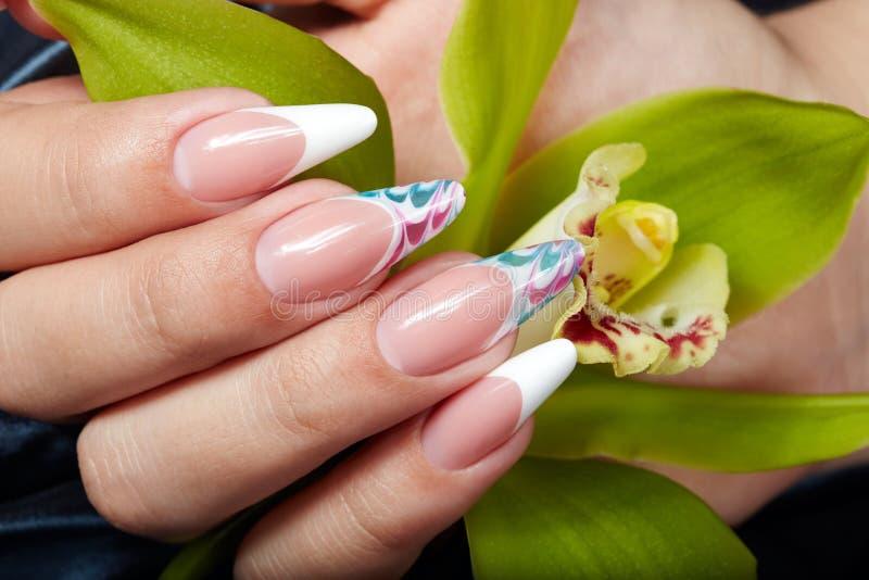 De hand met het lange kunstmatige Frans manicured spijkers houdend een orchideebloem royalty-vrije stock fotografie
