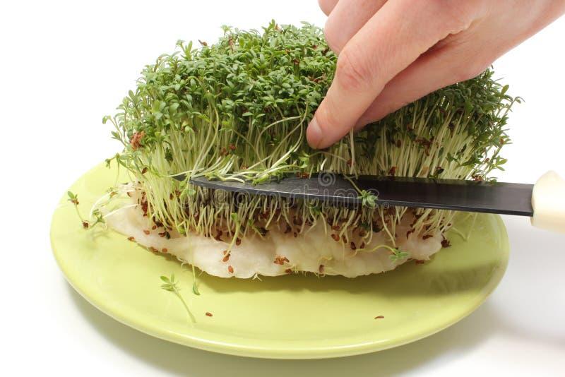 De hand met mes snijdt verse groene tuinkers royalty-vrije stock afbeelding