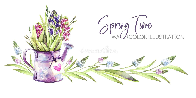 De hand schilderde horizontale grens met Hyacintenbloemen, bladeren en gieter Illustratie van de de lente de rustieke waterverf b royalty-vrije illustratie