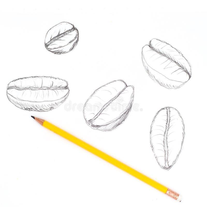 De hand trekt koffieboon op witte achtergrond met potlood vector illustratie