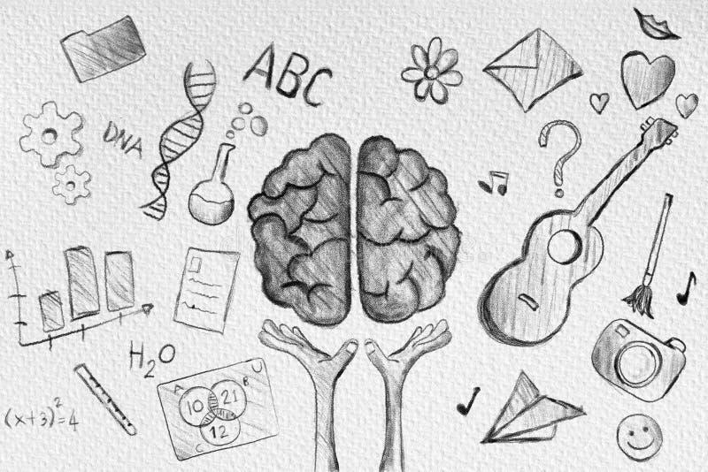 De hand trekt menselijk hersenendiagram stock illustratie