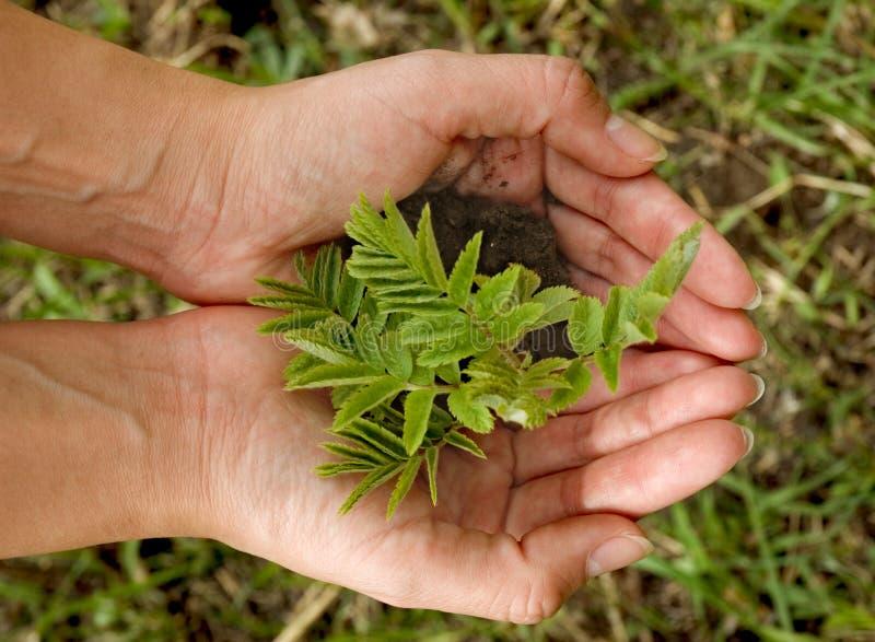 De hand van de tuinman stock afbeeldingen