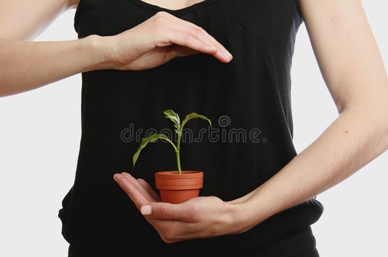 De hand van de vrouw met installatie stock afbeeldingen