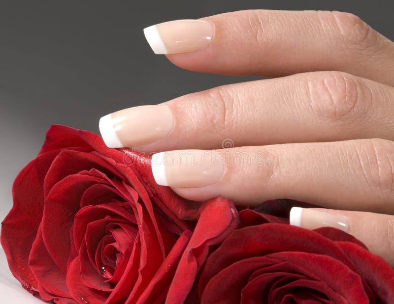 De hand van de vrouw met rode rozen royalty-vrije stock fotografie