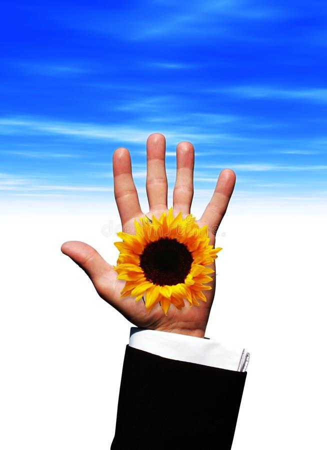 De hand van de zonnebloem royalty-vrije stock afbeelding