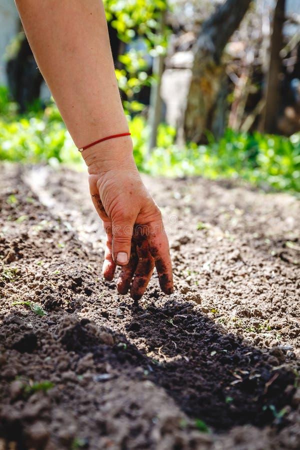 De hand van een bejaarde giet de aarde bij het zaaien Het concept het tuinieren, het leven ter wereld, stijl stock afbeeldingen