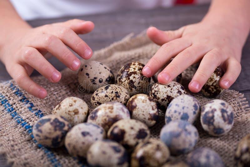 De hand van kinderen houdt de eieren van kwartels stock foto
