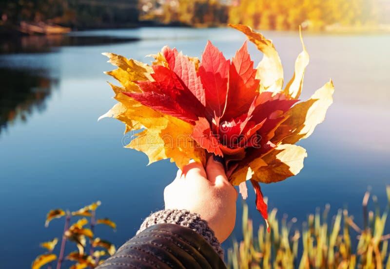 De handclose-up die van de vrouw een bos van de herfstbladeren houden op de achtergrond van meer stock fotografie