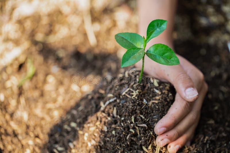 De handen beschermen bomen, installatiebomen, installatiebomen om het globale verwarmen, Bosbehoud, de Dag van het Wereldmilieu t royalty-vrije stock foto
