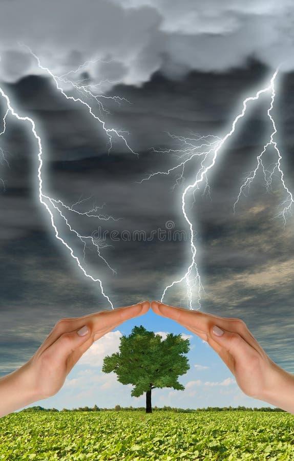 De handen bewaren een groene boom tegen onweersbui stock afbeelding