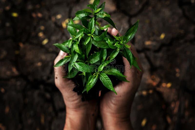 De handen die jonge planten op de dorre grond en gebarsten grond of dode grond in het aardpark houden van de groei van installati royalty-vrije stock afbeelding