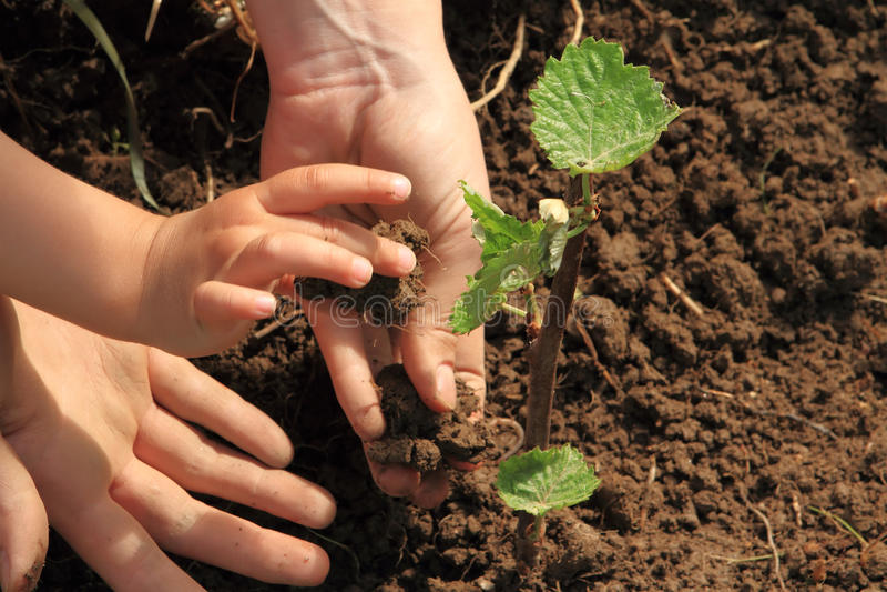 De handen die van het kind en van het mamma wijnstok planten stock afbeelding
