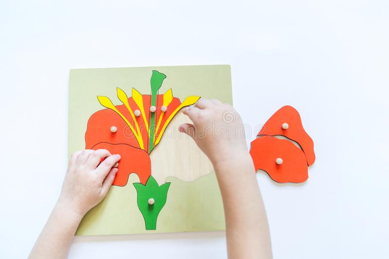 De handen die van het Kind van jongensstudenten biologie met montessorimateriaal leren royalty-vrije stock foto's