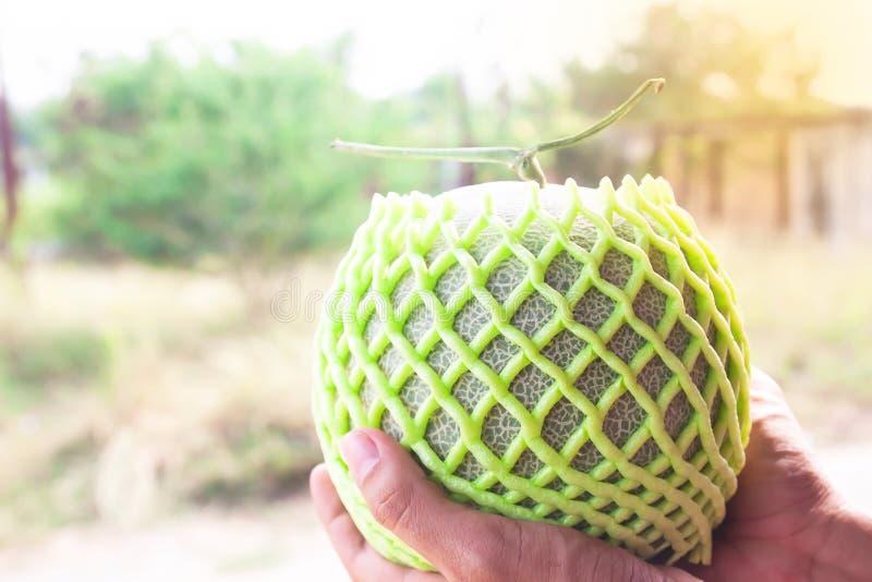 De handen die van de landbouwer verse meloen houden Landbouw comcept Gezond fruit stock afbeeldingen