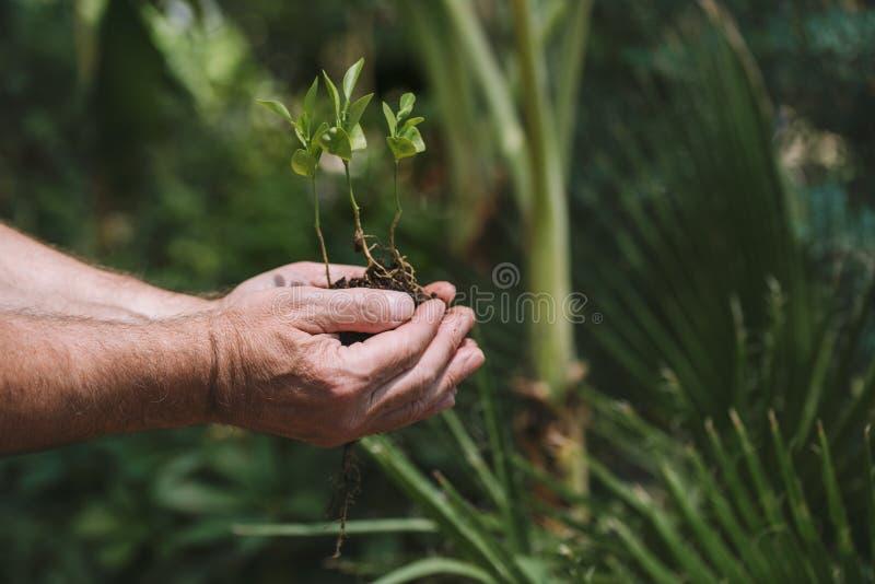 De handen die van de mens een groene jonge installatie houden Symbool van de lente en ecologieconcept stock afbeeldingen