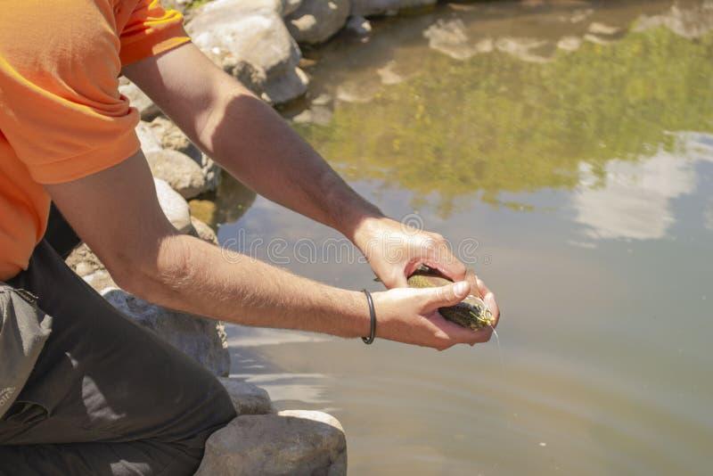 De handen houden een kleine vis stock afbeelding