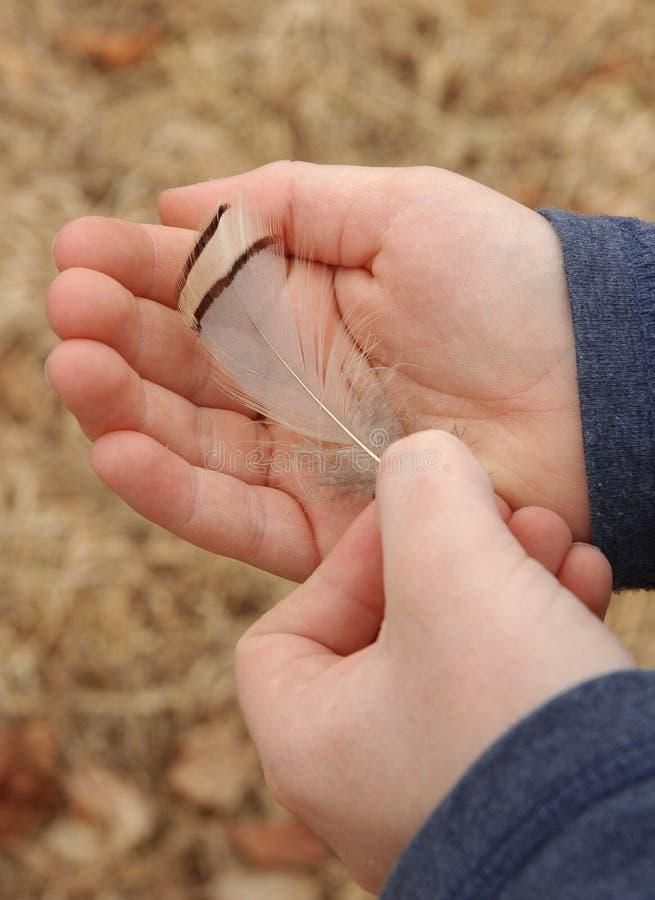 De Handen van de Veer van de fazant stock foto's