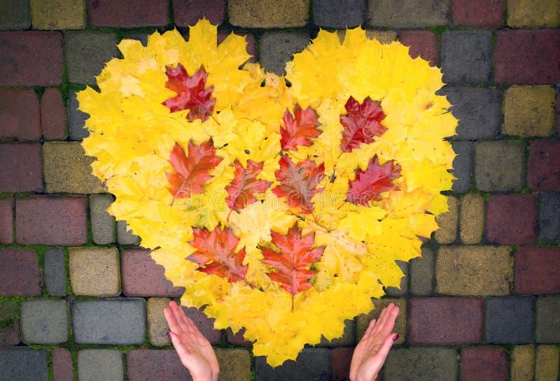 De handen van vrouwen houden een hart van gele en rode esdoorn en eiken bladeren stock fotografie