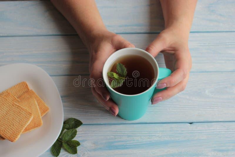 De handen van vrouwen houden een mok thee met munt stock afbeeldingen