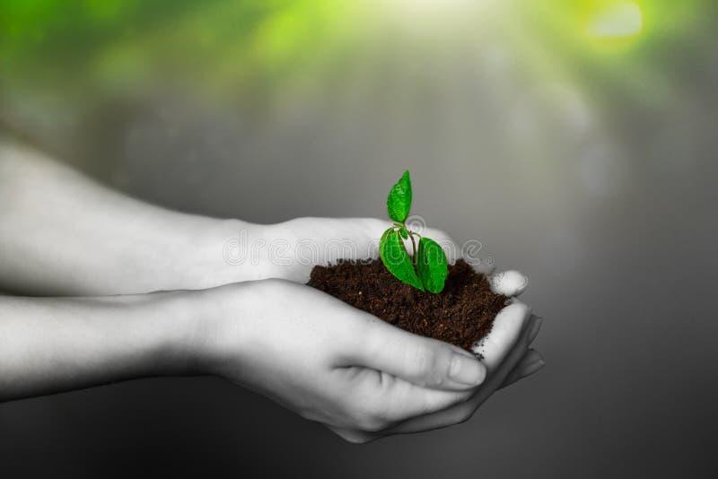 De handen van vrouwen houden vruchtbaar land met een kleine spruit Het concept milieubehoud, biologische landbouw Zwarte en royalty-vrije stock afbeelding