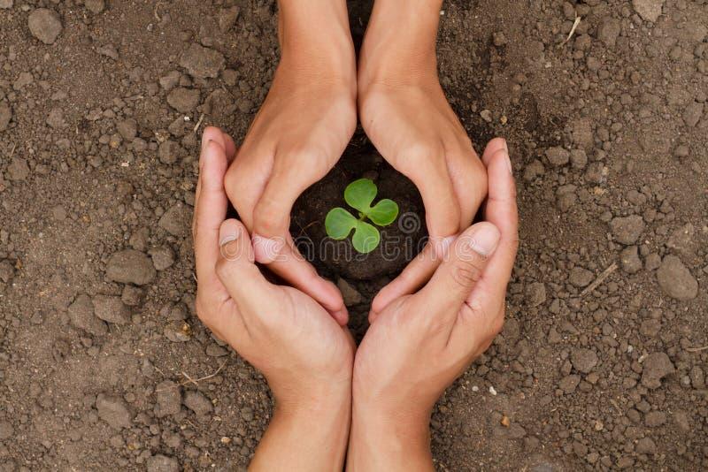 De handen zijn beschermen een kleine boom of de installatie groeit op grond stock foto
