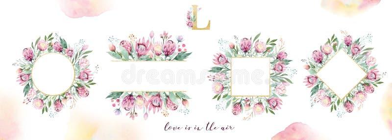 De handtekening isoleerde waterverf het bloemenkader met protea, bladeren, takken en bloemen toenam Boheems gouden kristal stock foto