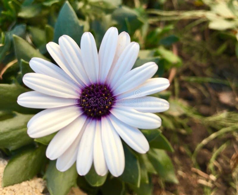 De hangende bloemen in a wintergarden mooie kleuren stock afbeeldingen