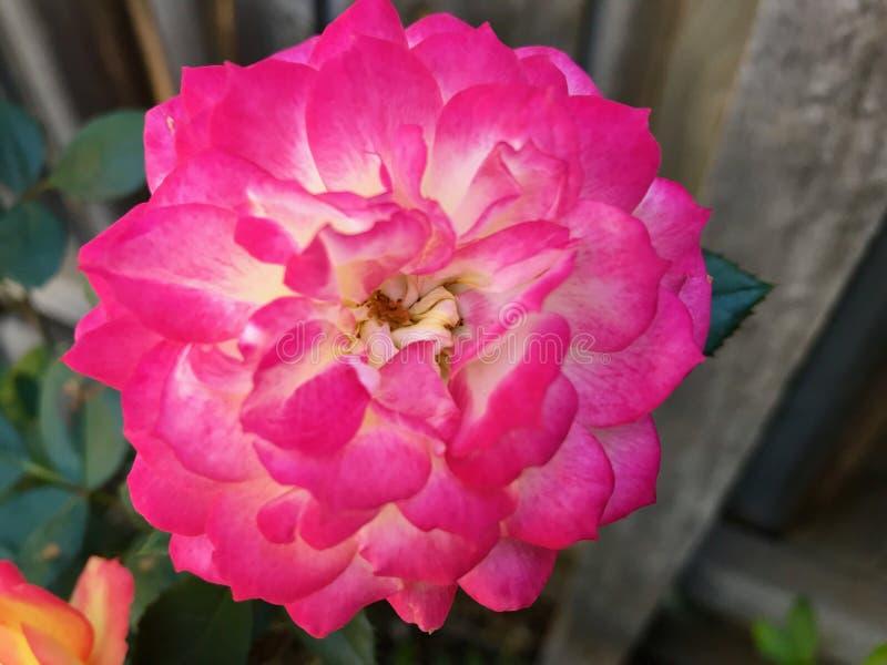 De hangende bloemen in a wintergarden mooie kleuren royalty-vrije stock fotografie