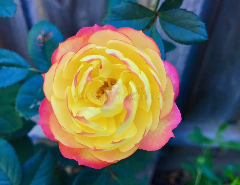 De hangende bloemen in a wintergarden mooie kleuren royalty-vrije stock foto