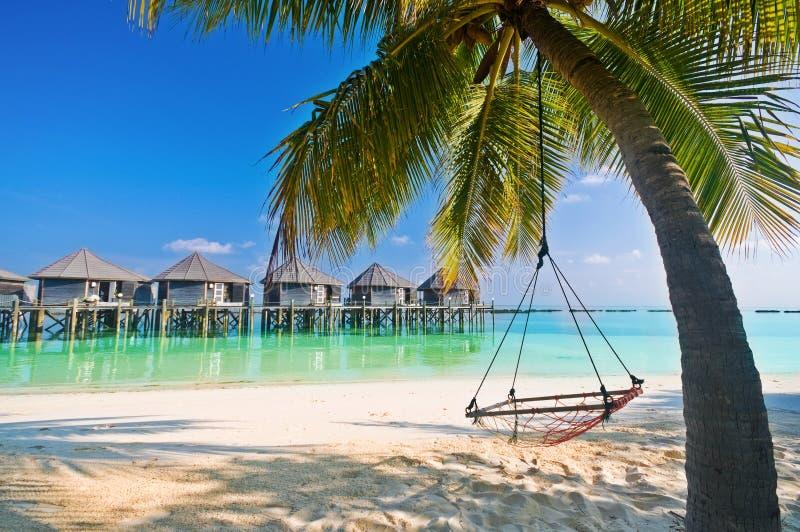 De Hangmat van het strand onder palmen stock afbeeldingen