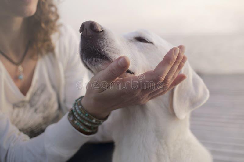De hartelijke hond plaatst zijn snuit op zijn hoofdhand van ` s stock afbeeldingen