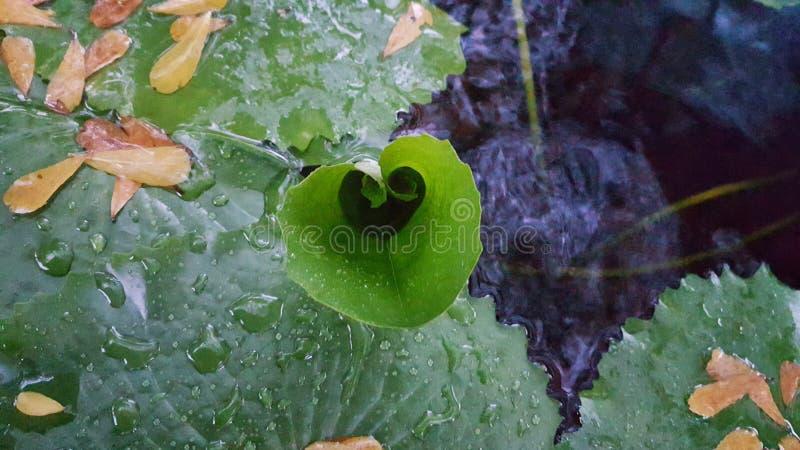 De hartvorm van het groen maken royalty-vrije stock afbeelding